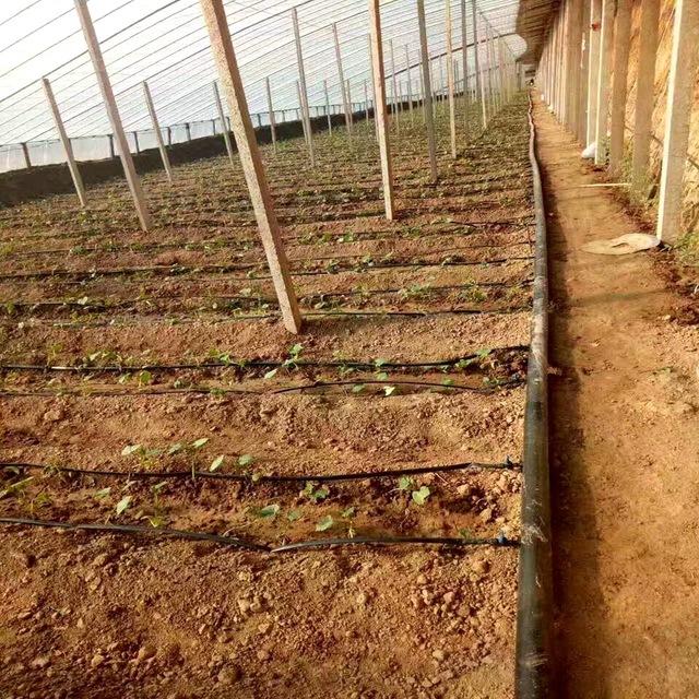 厂家供应山西长治温室大棚滴灌带  西红柿贴片滴灌带灌溉设备造价