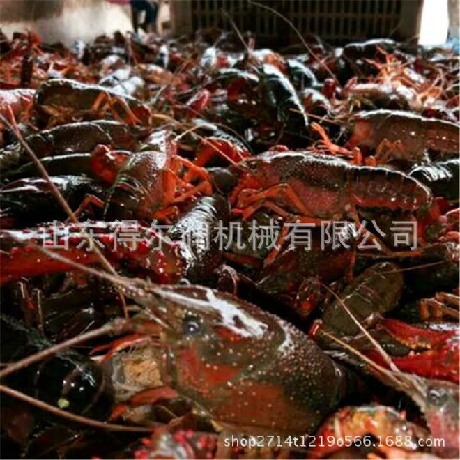 潜江小龙虾清洗加工设备 小龙虾油炸上色机械 小龙虾油炸工艺咨询