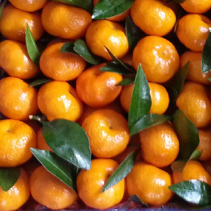 正宗沙糖桔 沙滩橘 广西桂林沙糖桔 特价批发新