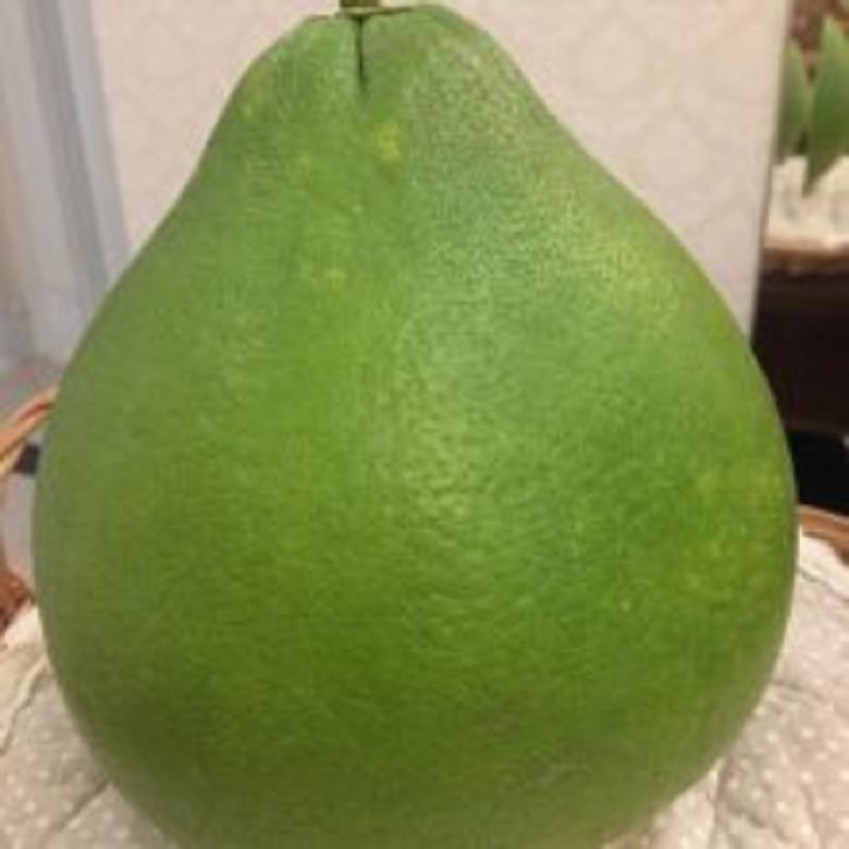 江门台山有正宗泰国青柚苗
