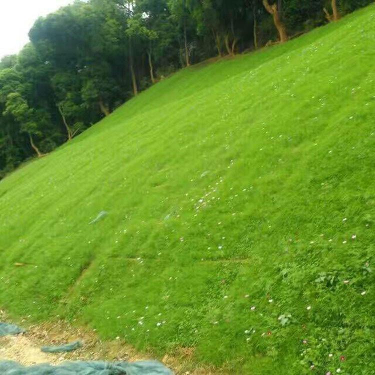 狗牙根草坪种子批发 护坡草坪种子价格 四季青草坪种子 花晏供应优质绿化草坪种子 量大优惠