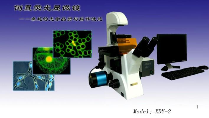 倒置荧光显微镜代理  倒置荧光显微镜XDY-2  倒置荧光显微镜报价示例图1
