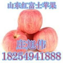 供應山東紅富士蘋果,批發紅富士產地,今日紅富士蘋果價格,蘋果批發產地