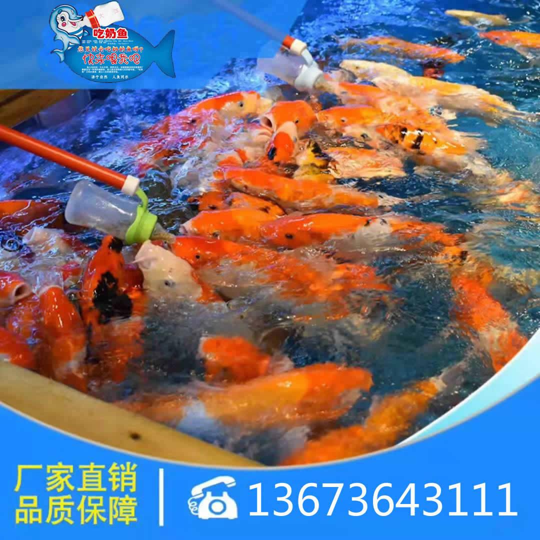 吃奶鱼和旋转秋千鱼升级进化活鱼 们玩的开心吃奶鱼也叫长寿鱼喂奶鱼,娃娃鱼或者 鱼,溜溜鱼,奶嘴鱼示例图27