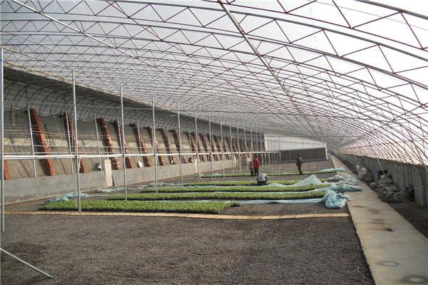 温室圣亚PC阳光板大棚 智能大棚咨询潍坊圣亚温室施工