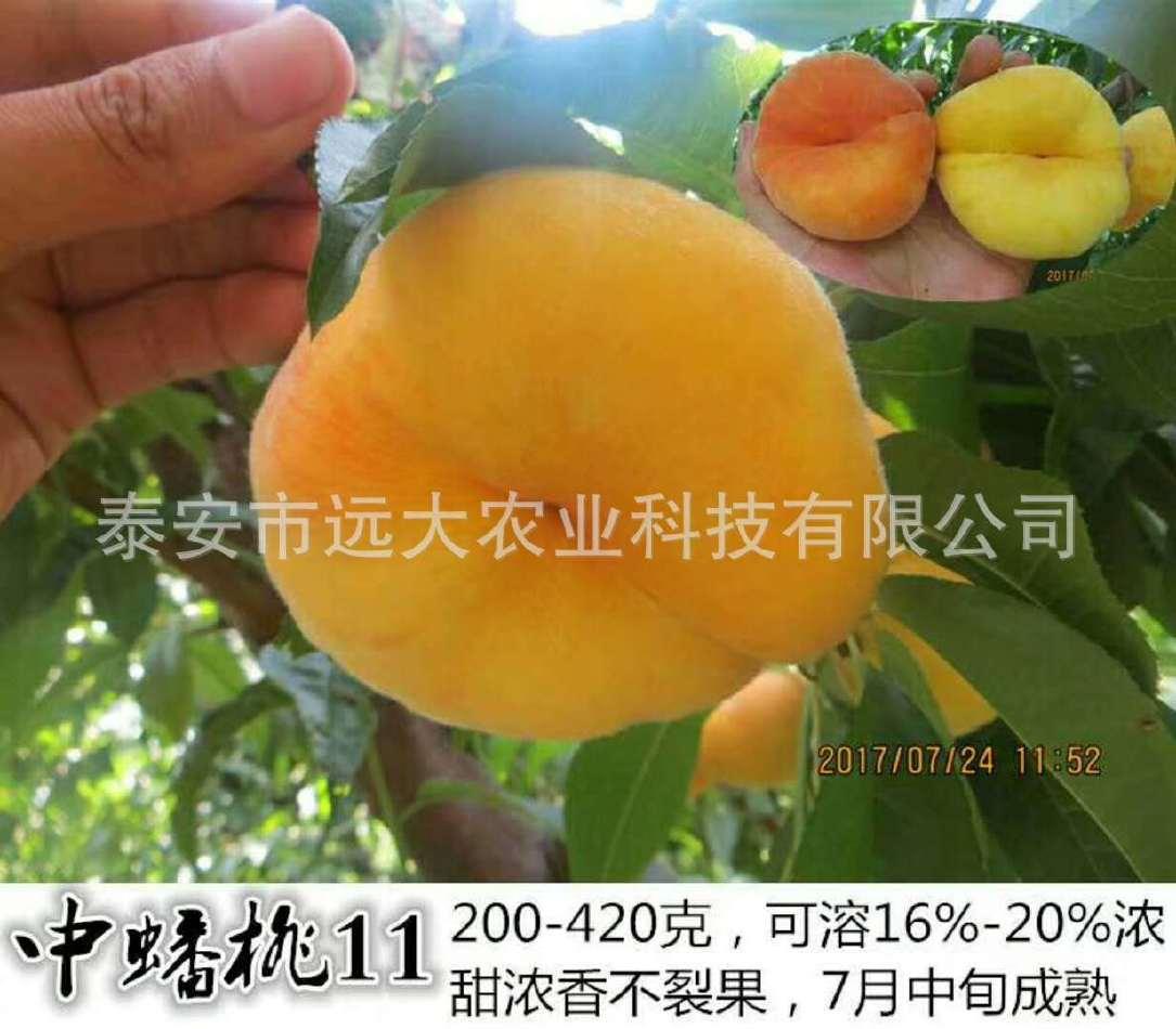 映霜红桃树苗  桃苗价格优惠 成活率高达98% 晚熟雪桃品种示例图6