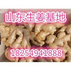 今日山東生姜價格山東小黃姜批發大黃姜批發價格