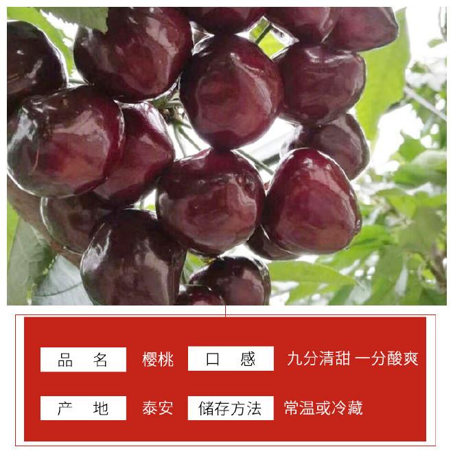 优质红灯樱桃树 基地大量批发嫁接樱桃树 品种齐全 俄八樱桃苗示例图3