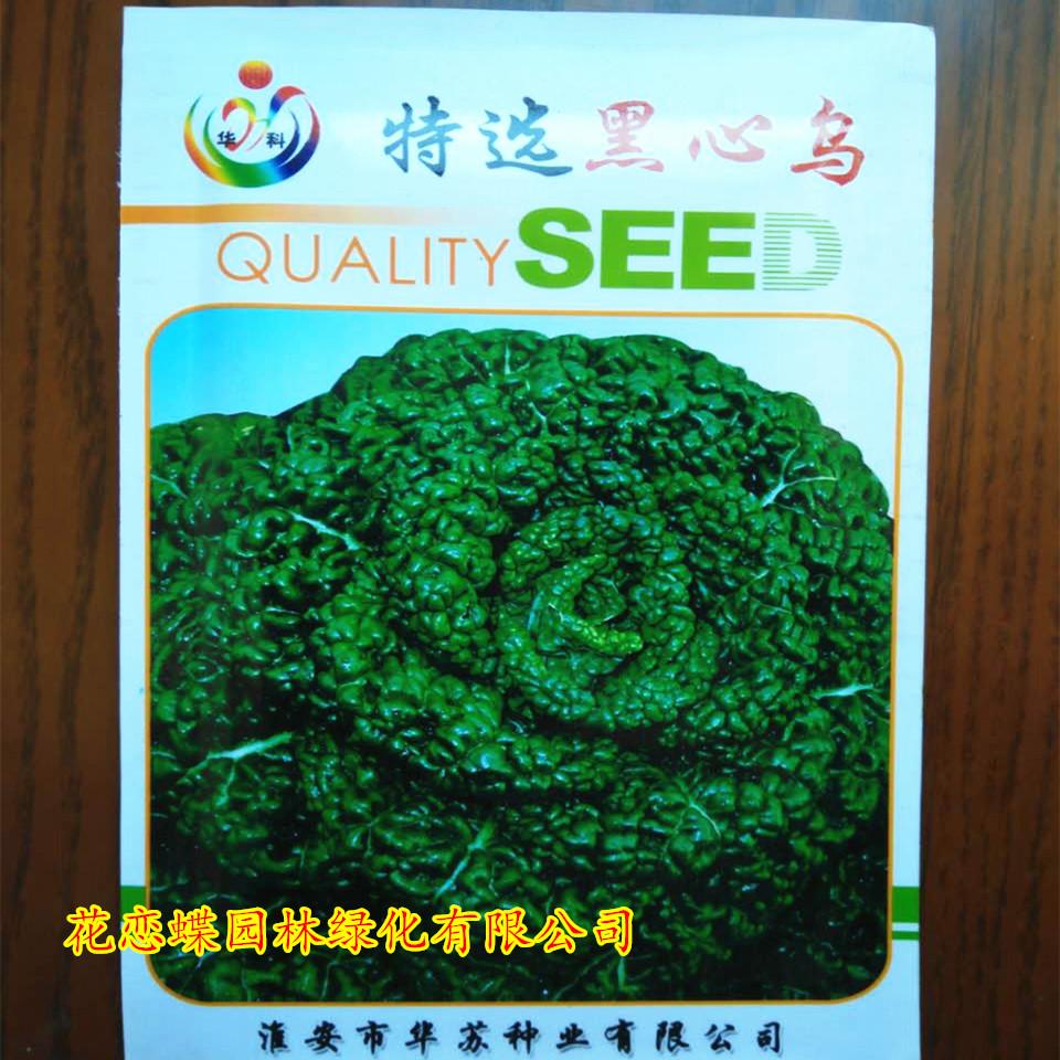 盆栽蔬菜梧桐种子小白菜种子不耐寒黑心梧桐种子