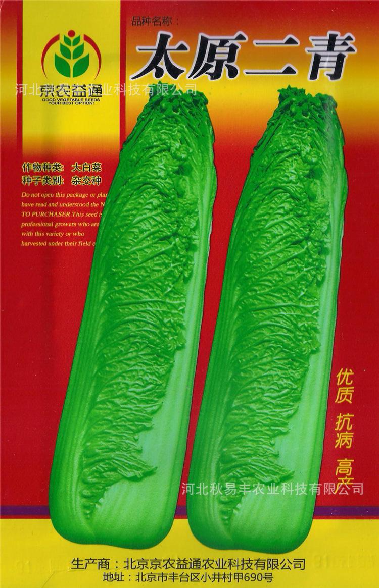 绿叶甘蓝种子、蔬菜种子、直筒甘蓝、高产抗病
