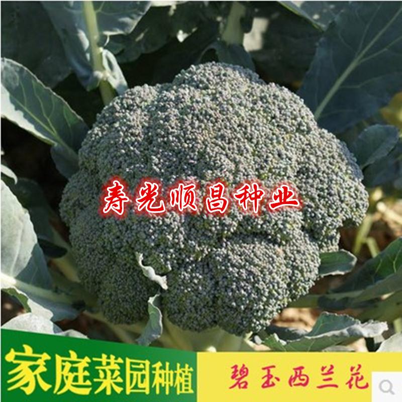 寿光蔬菜种子碧玉西兰花种子绿色西兰花耐寒原包装3