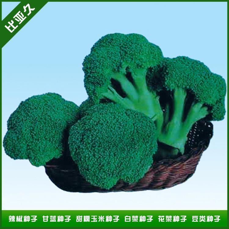 制造商推荐比亚久-田健3号西兰花种子耐寒西兰花种子