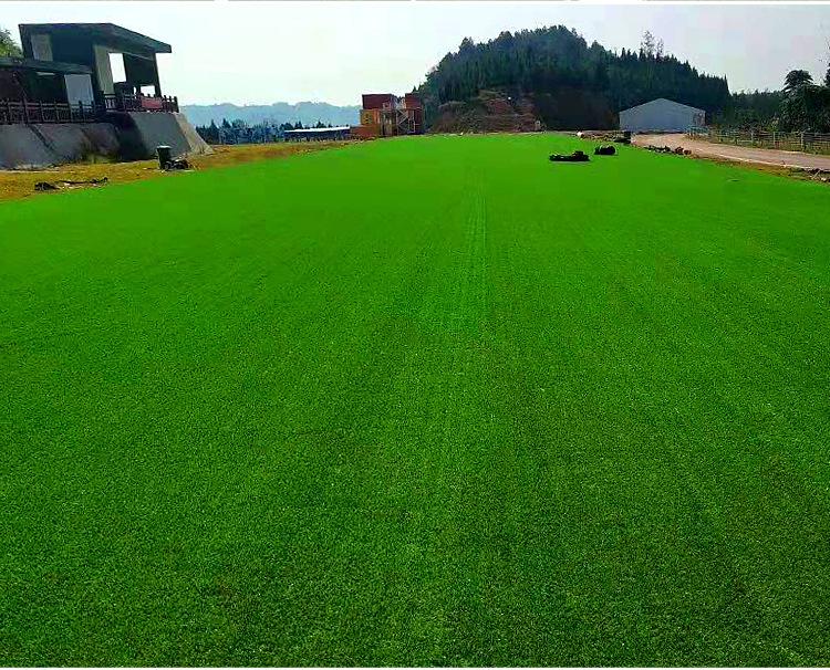 仿真草坪人造草 假草坪地毯 幼兒園彩色草皮人工塑料假草綠色戶外示例圖6