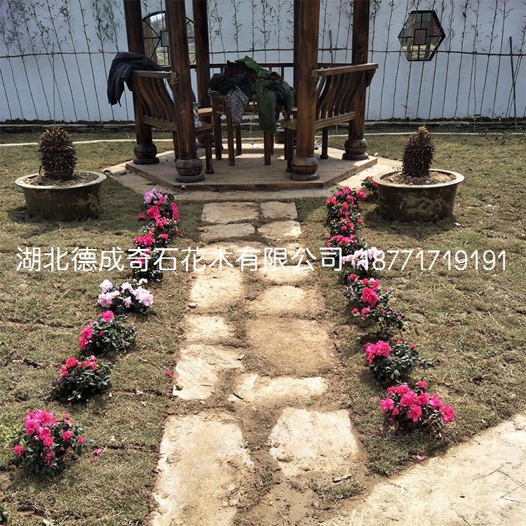 庭院铺路石汀步石景墙石批发示例图12