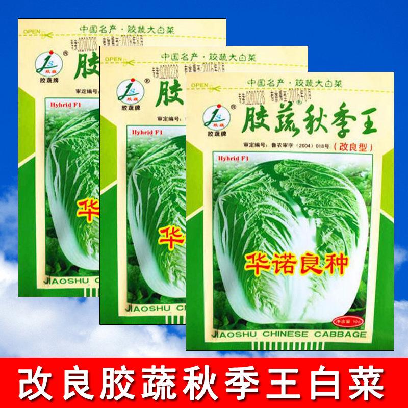 蔬菜种子果冻蔬菜秋王改良白菜种子批发白菜原种1