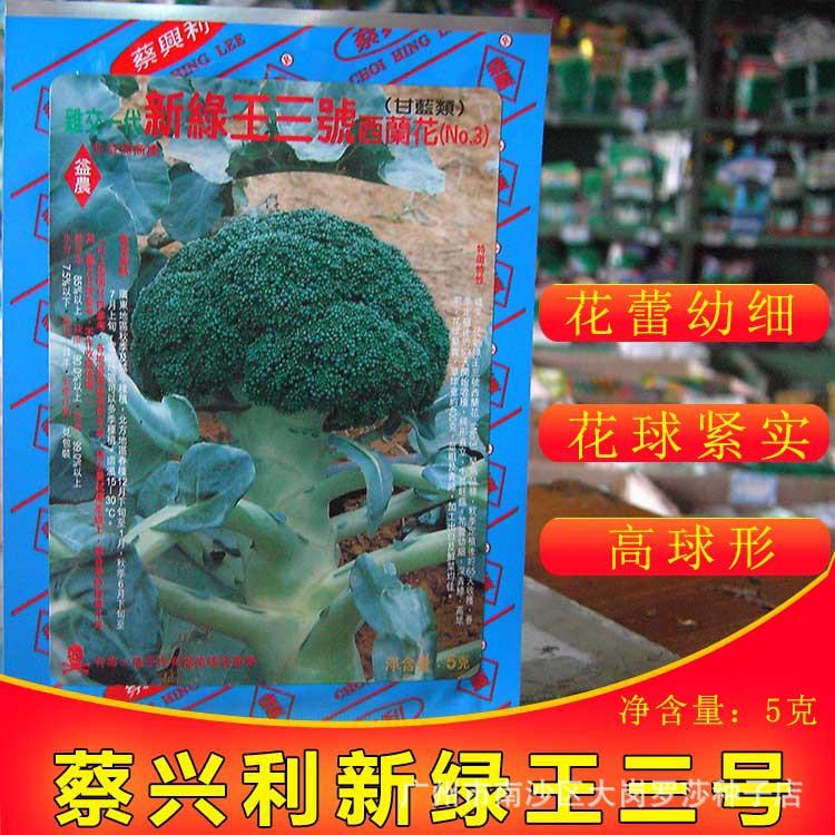 蔡新绿王3号菜阳台5g西兰花种子基地在广州种植