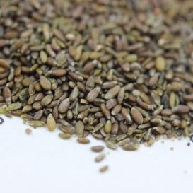 销售沙蒿种子  沙蒿种子批发  一斤起发货