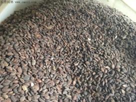 软枣种子批发零售  低价批发  便宜质量好